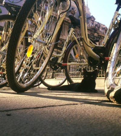 About Bike The City